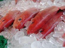 Морской окунь  без головы шт. заморозка 300-500 гр  Калининград от 7 кг